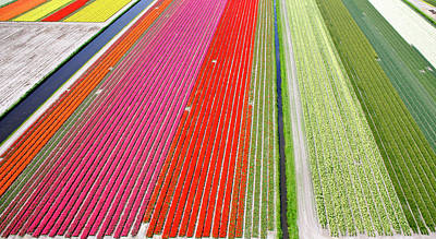 Photograph - Commercial Flower Bulb Cultivation by Michael Layefsky