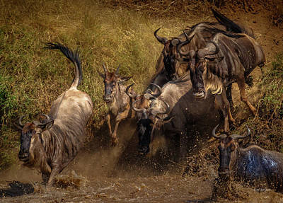 Photograph - Committment...the Great Migration by Tim Bryan