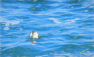 Digital Art - common Eider duck,blue ocean water. by Rusty R Smith