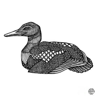 Drawing - Common Loon by Amy E Fraser