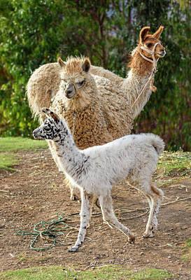 Photograph - Co'mo Se Llama? by Jon Exley