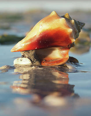 Photograph - Conch On High by David Bader