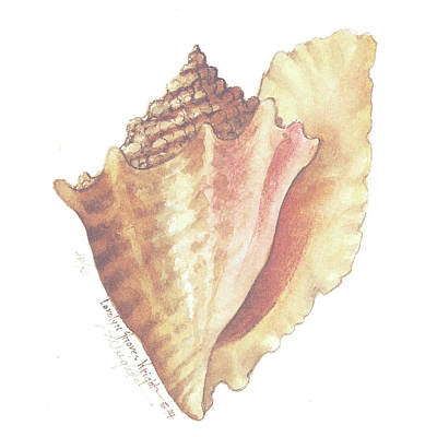 Wall Art - Painting - Conch Shell by Carolyn Shores Wright