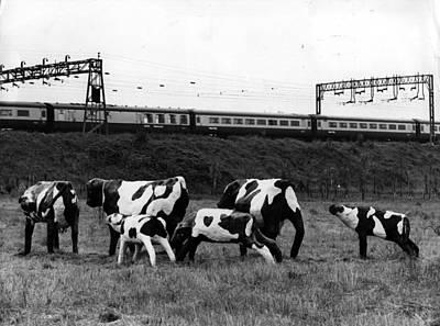 Concrete Cows Art Print by Ian Tyas
