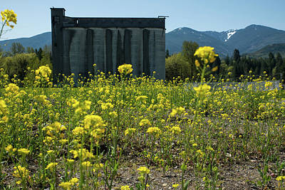 Photograph - Concrete Silos And Yellow Wildflowers by Tom Cochran