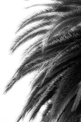 Photograph - Contrast Palm by Brett Nelson