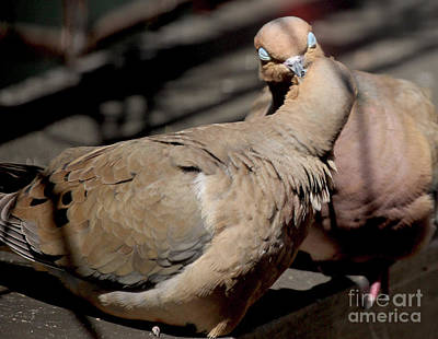 Photograph - Cooing Mourning Doves 1 by Patricia Youngquist