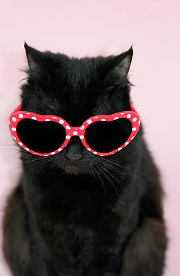 Cool Cat Wearing Sunglasses Art Print by Kelly Bowden
