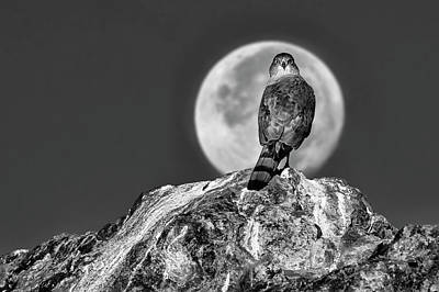 Photograph - Coopers Hawk With Moon Bw by Rick Mosher