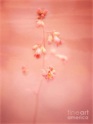 Photograph - Coral Bell by Scott Kemper