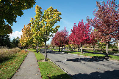 Photograph - Cordata Parkway In Autumn by Tom Cochran