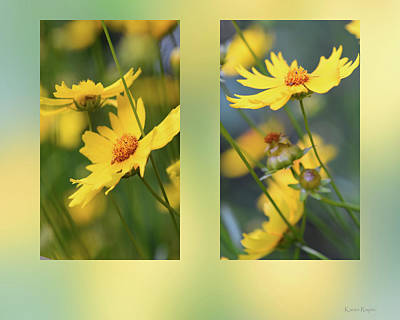 Photograph - Coreopsis Flowers by Karen Rispin