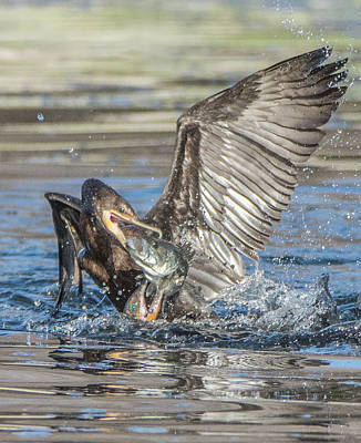 Photograph - Cormorant With Fish 5261-022619-2 by Tam Ryan