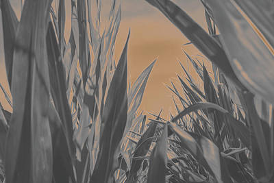 Photograph - Corn Field Glow by Keith Smith