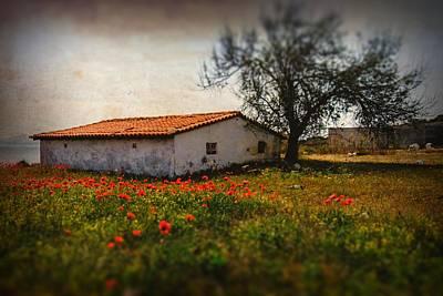 Photograph - Corn Poppies by Okan YILMAZ