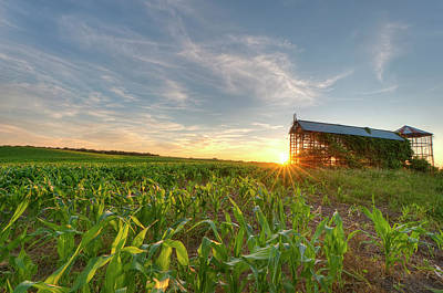Photograph - Cornfield And Grain Bin At Sunset by Hauged