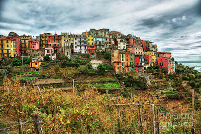 Photograph - Corniglia Cinque Terre by Wayne Moran