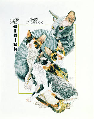 Drawing - Cornish Rex by Barbara Keith