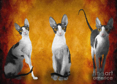 Amy Weiss - Cornish Rex No 12 by Mia Stedt