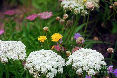 Photograph - Cornish Wild Flowers by Terri Waters