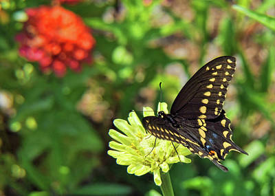 Photograph - Corolla Garden by JAMART Photography
