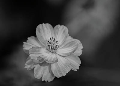 Photograph - Cosmos 2018-2a by Thomas Young
