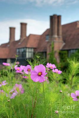 Photograph - Cosmos Bipinnatus Flowers At Rhs Wisley Gardens  by Tim Gainey