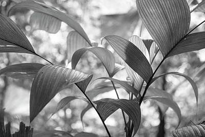 Arenal Photograph - Costa Rica Plants Black And White by Betsy Knapp