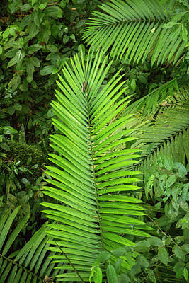 Royalty-Free and Rights-Managed Images - Costa Rica Vibrant Green by Betsy Knapp