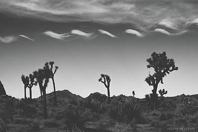 Photograph - Cotton Sky On Joshua Trees by Joseph Westrupp