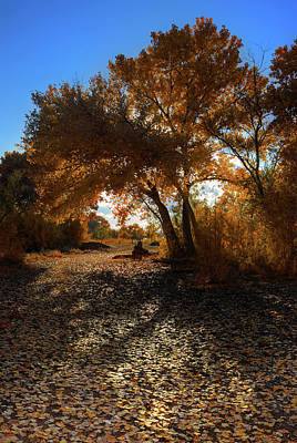 Autumn Photograph - Cottonwood Tree In Autumn by Rich Greene Photography