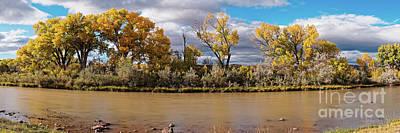 Photograph - Cottonwoods Shining In The Sun Along The Rio Chama In Abiquiu - Rio Arriba County New Mexico by Silvio Ligutti
