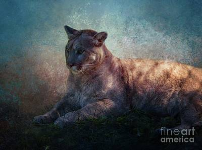 Mixed Media - Cougar by Eva Lechner