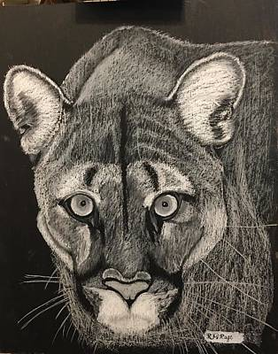 Pastel - Cougar by Richard Le Page