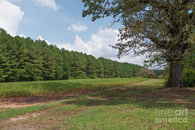 Photograph - Country Farm Off Liberty Highway by Dale Powell