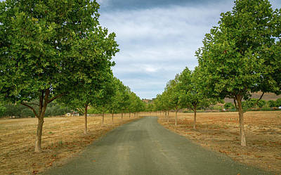 Photograph - Country Lane To Vineyard by Michael Hope