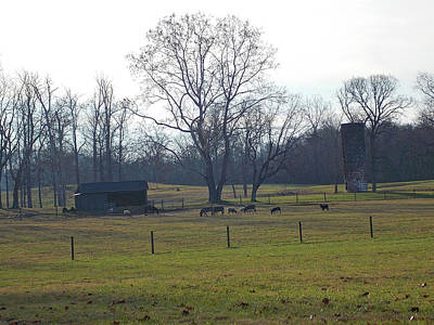 Photograph - Country Pasture by Matthew Seufer