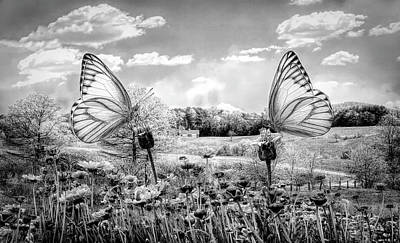 Photograph - Country Roads In Butterflies Black And White by Debra and Dave Vanderlaan