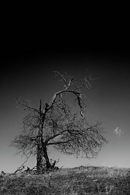 Unicorn Dust - Cousin of Groot by Guy Shultz