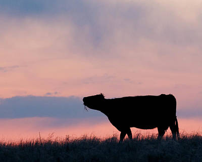 Photograph - Cow After Sunset 01 by Rob Graham