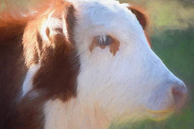 Photograph - Cow Portrait 2 by Andrea Anderegg