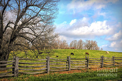 Photograph - Cows Along The Blue Ridge Parkway by Kerri Farley