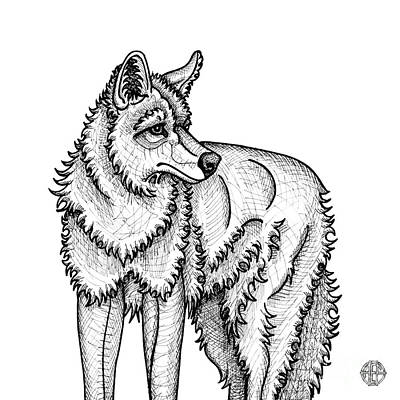 Drawing - Coyote by Amy E Fraser