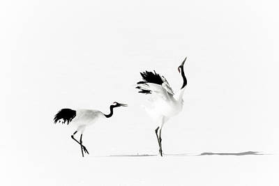Birds In Snow Wall Art - Photograph - Crane by Makieni's Photo