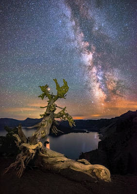Photograph - Crater Lake Twisty Tree by Darren White