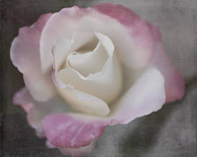 Photograph - Creamy White Center By Tl Wilson Photography by Teresa Wilson