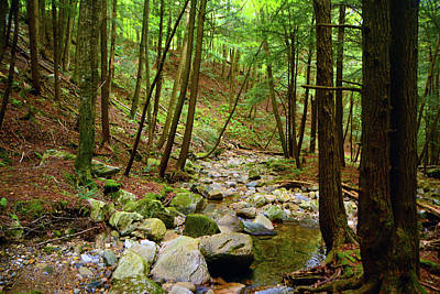 Photograph - Creek In Massachusetts 2 by Raymond Salani III