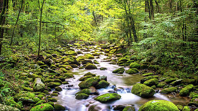Photograph - Creek Running Through Roaring Fork In Smoky Mountains by Susan Schmitz
