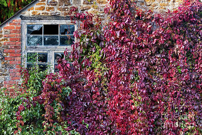 Photograph - Creeping Ivy by Tim Gainey