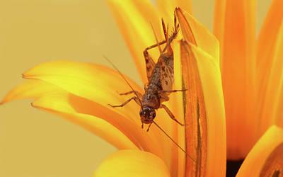 Insect Photograph - Cricket by Retales Botijero